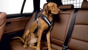 original-allsafe-dog-harness-02